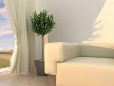 7 plante cu proprietati magice: absorb energiile negative si purifica aerul