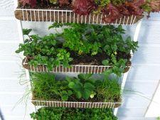 Gradina din apartament: ce legume poti sa cresti chiar la tine in balcon!