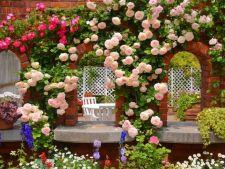Iata care sunt cele mai parfumate flori perfecte pentru gradina ta