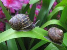 6 moduri inedite de a goni melcii din straturile de flori