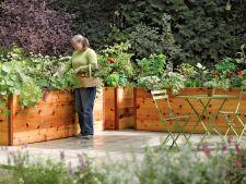 Cum iti feresti legumele de un sol contaminat. Iata solutiile optime!