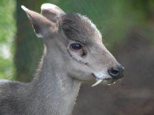Top 7 cele mai neobisnuite animale de pe Pamant