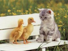Cele mai ciudate legi despre animale din jurul lumii