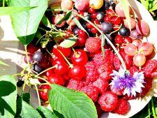 Ce fructe delicioase poti culege in luna iunie din gradina ta