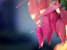 Cum sa realizezi un contrast superb al frunzelor in gradina ta