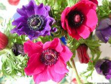 5 flori care pot fi plantate in gradina ta acum!