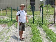 Cum sa iti protejezi plantele vara de daunatori: 8 solutii bio pentru gradina ta!