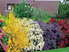 5 plante cu flori, perfecte pentru un gard viu