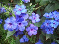 5 flori magnifice pe care le poti planta la mijlocul lunii iunie