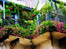 Minigradina de pe terasa: Vezi plantele de ghiveci care se potrivesc balconului tau!