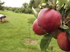 Ingrijirea pomilor fructiferi pe timpul verii. Iata ce ai de facut in livada!