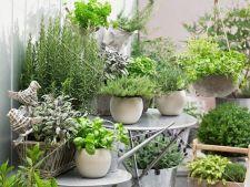 Gradina cu arome. 5 plante aromatice pe care le poti cultiva acasa