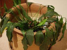 Pleci in  concediu? 4 masuri de ultim moment pentru a-ti mentine plantele in viata!