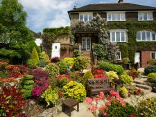 6 flori de iulie din gradina ta. Iata cum trebuie sa le ingrijesti!
