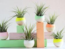 5 plante de interior usor de intretinut. Uite ce ce iti poti impodobi casa!