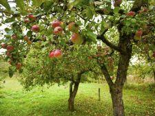 7 reguli de aur pentru plantarea unui pom fructifer