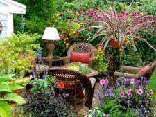 5 plante care adora apa, potrivite pentru gradinile cu sol umed