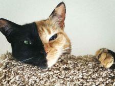 pisica venus 1