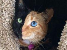 pisica venus 7