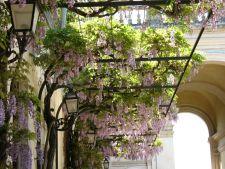 5 plante cataratoare pentru o gradina de vara in stil luxuriant