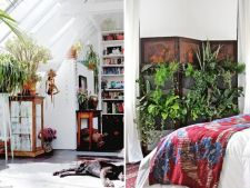 6 moduri in care poti schimba interiorul casei folosind ghivecele cu plante