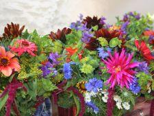 5 combinatii superbe de flori pentru gradina ta. Uite ce plante poti imperechea!