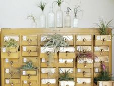 6 moduri inedite de a creste plantele de apartament in ghivece neconventionale