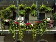 6 plante decorative pentru un balcon umbrit. Uite ce poti creste in balconul tau!