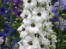 Frumoase, dar otravitoare. 7 plante decorative periculoase pentru copii