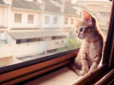 pisici melancolice 5