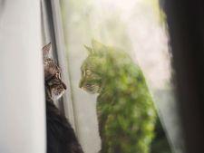 pisici melancolice 6