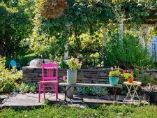 5 trucuri pentru o gradina in culori vibrante