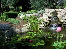 6 plante pentru filtrarea apei iazului din gradina ta