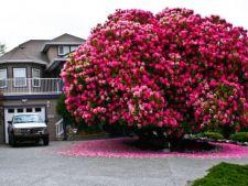 7 copaci magnifici pe care ti i-ai dori in gradina cu orice pret