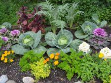 5 legume pentru o gradina exotica