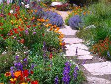 5 tufe florale pentru o gradina de vara perfecta. Iata ce trebuie sa plantezi!