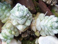 Gradina de buzunar: 4 plante miniaturale pe care le poti purta dupa tine!