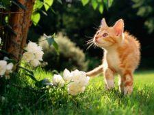 Animalele, in pericol! 6 plante de gradina otravitoare pentru caini si pisici