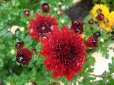Ce mai plantezi toamna. 5 idei pentru amenajarea gradinii de sezon!