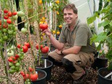 Invata cum sa conservi semintele de rosii pentru sezonul viitor