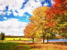 7 pomi cu frunzis colorat pentru o toamna vesela