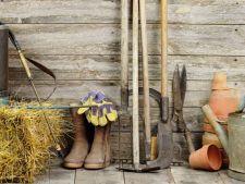 Calendarul gradinarului pentru luna septembrie. Vezi ce lucrari trebuie sa faci in gradina acum!