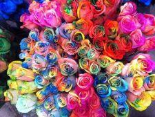 Coloreaza-ti florile dupa bunul plac. Iata cat e de simplu!