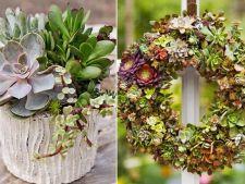 Plantele suculente, in x aranjamente uluitoare pe care le poti realiza chiar tu