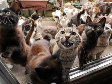 Orasul unde pisicile fac legea. Sunt mai multe decat oamenii!
