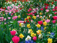 5 plante cu bulbi care trebuie plantate in gradina toamna