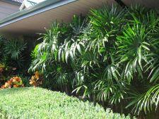 3 plante rezistente, usor de intretinut chiar si de uituci