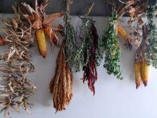 Uscarea naturala, cel mai ieftin mod de a pastra condimentele din gradina