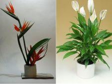 4 plante care nu se tem de intuneric