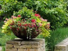 Cele mai frumoase flori ale toamnei. Iata cu ce iti poti impodobi gradina acum!